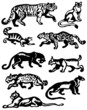 Collection of silhouettes of wild cats