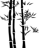 Fototapety Silhouette of a branch of a bamboo