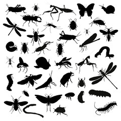 Collection of silhouettes of insects