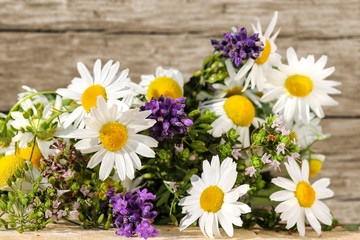 Homöopathie mit Kräutern und Heilpflanzen