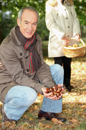 Middle-aged couple gathering chestnuts