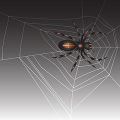 Spider on dark background