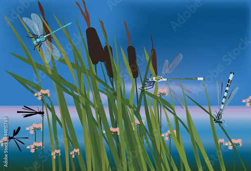 rush and dragonflies near pond