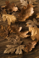 Autumn leaves_02