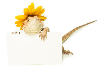 lizard holding card in hand on white