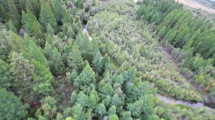flight above  evergreen forest