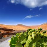Fototapete Hintergrund - Canarias - Pflanze