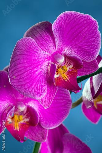 Fototapeten,orchidee,blume,natur,motte