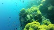 dive   sea anemone