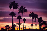 Fototapety Palm trees and sunset