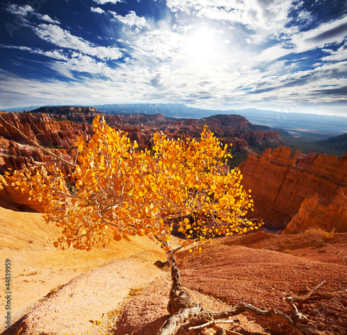 Tuinposter Canyon Autumn in Bryce