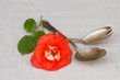 antique cutlery - spoon and fork with rose