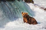 Fototapeta niesamowity - Ameryka - Dziki Ssak