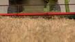 Wheat harvest season ....
