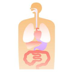 人体 内臓 体