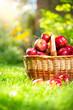 Fototapeta Organiczny - Bios - Owoc