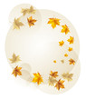 Autumn falling maple leaves. Vector