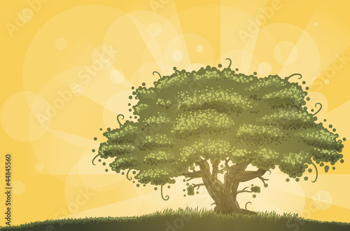 oak tree in morning sunlight