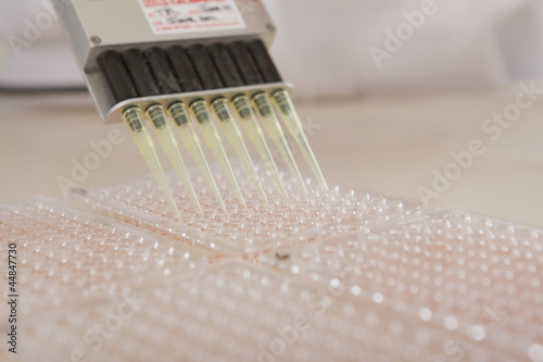 Pipette filling tray in laboratory