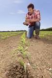 Farmer examining corn seedling in field