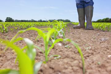 Farmer in wellingtons standing in field with corn seedlings