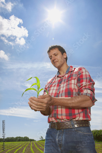 Farmer cupping corn seedling in field