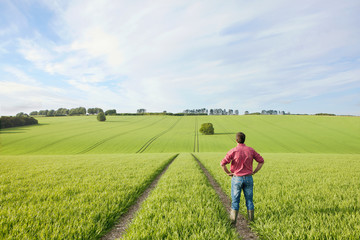 Farmer standing with hands on hips in field