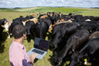 Farmer using laptop among herd of cattle in rural field