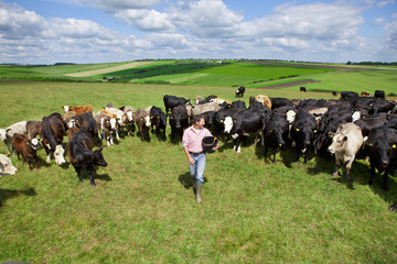 Farmer with bucket among cattle herd in sunny rural field