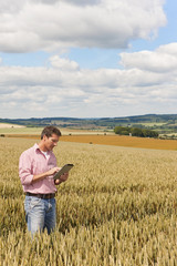 Farmer using digital tablet in sunny young wheat field