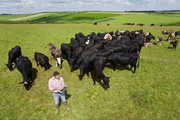 Farmer using laptop among herd of cattle in rural field