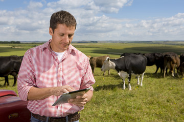 Farmer using digital tablet in sunny rural field with cattle