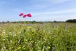 Sunny wildflower field