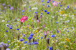 Close up of vibrant wildflowers in sunny field