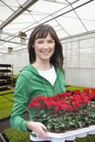 Portrait of smiling woman holding tray of flowers in greenhouse