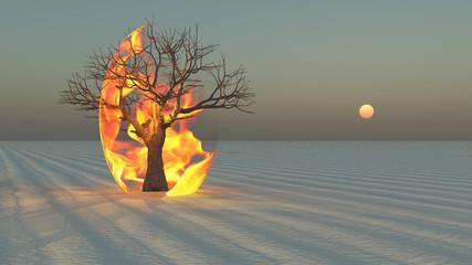 Fire burning around tree in desert Sands