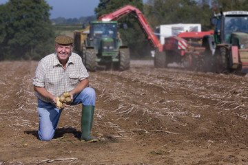 Portrait of smiling farmer kneeling and holding potatoes in sunny, rural field with tractors in background