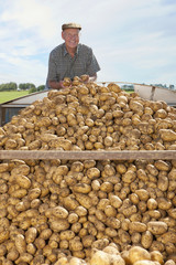 Portrait of smiling farmer standing above heap of potatoes in trailer