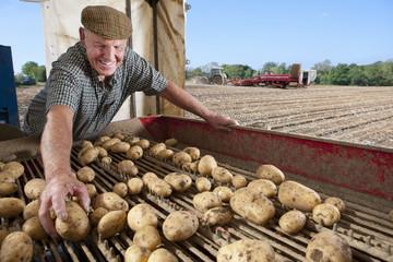 Smiling farmer inspecting potatoes on conveyor belt in rural field