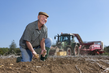 Smiling farmer harvesting potatoes in sunny, rural field with tractors in background