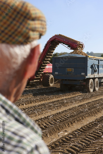 Farmer watching potatoes being emptied into trailer in sunny, rural field
