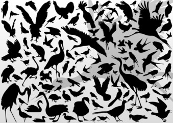 Big and small birds detailed illustration collection