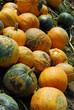 Herbstliche Kürbisernte