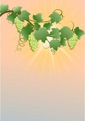 Weisser Wein in der Abendsonne