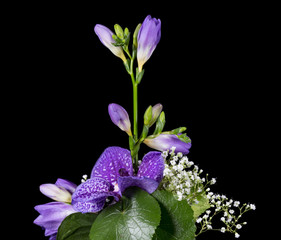 Flower arrangement of a blue vanda isolated on black