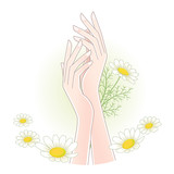 Beautiful woman's hands with chamomile flowers