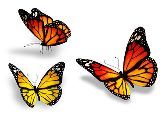 Three yellow butterfly, isolated on white background