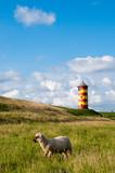 Schaf vor Pilsumer Leuchtturm