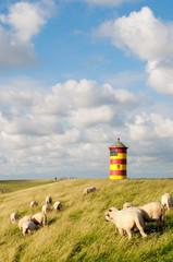 Schafe vor Pilsumer Leuchtturm