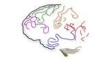 The human brain structure animation illustration